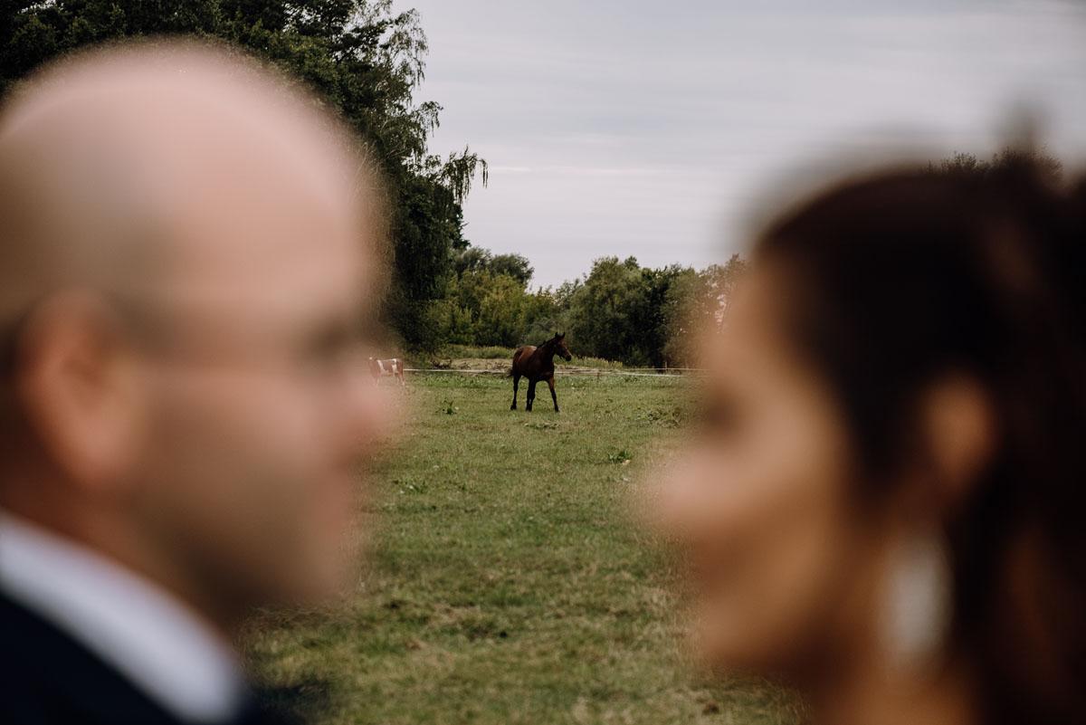 naturalna-sesja-penerowa-na-wsi-konie-krowy-kujawsko-pomorskie-Daniela-Maciej-016
