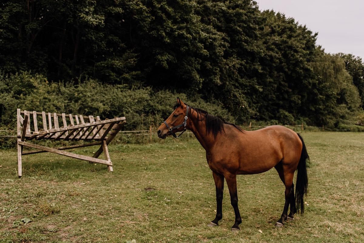 naturalna-sesja-penerowa-na-wsi-konie-krowy-kujawsko-pomorskie-Daniela-Maciej-017