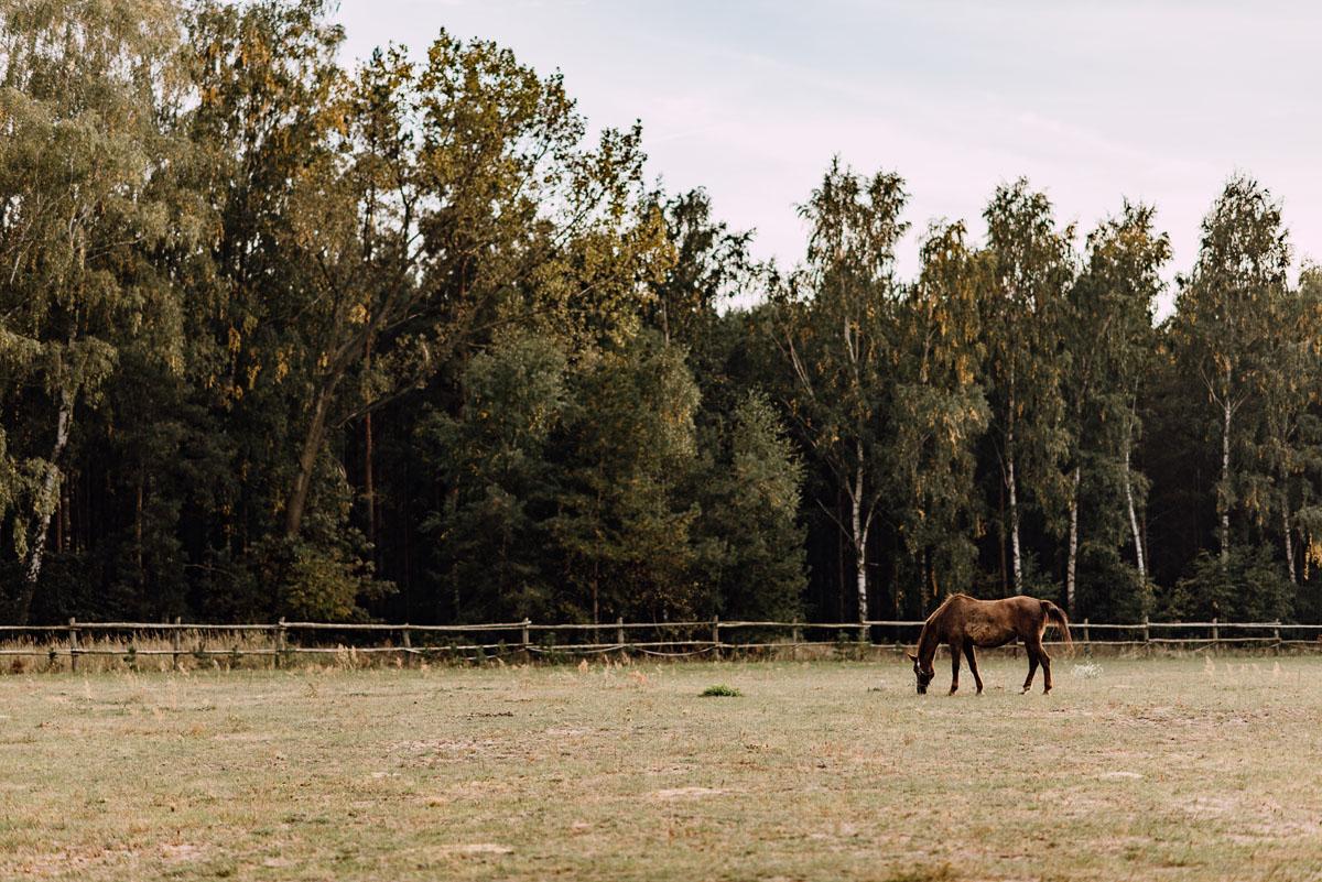 jesienny-plener-slubny-stadnina-koni-Balczewo-Joanna-Michal-002