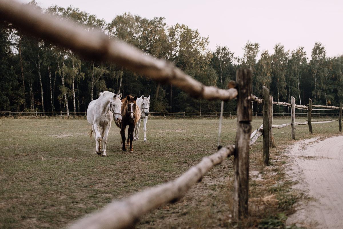 jesienny-plener-slubny-stadnina-koni-Balczewo-Joanna-Michal-005