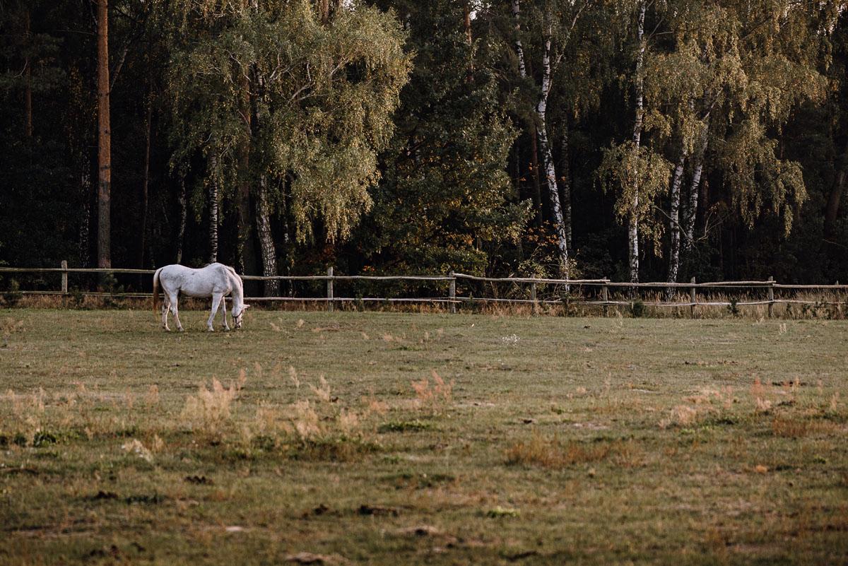 jesienny-plener-slubny-stadnina-koni-Balczewo-Joanna-Michal-008