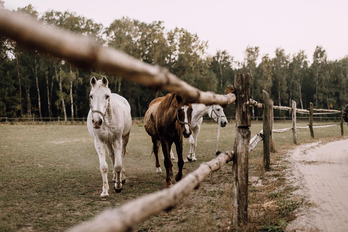 jesienny-plener-slubny-stadnina-koni-Balczewo-Joanna-Michal-038