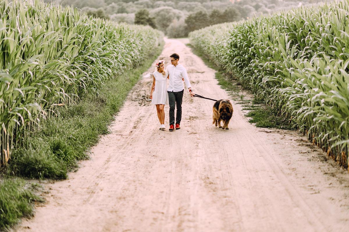 letnia-sesja-narzeczenska-pole-kukurydzy-pies-owczarek-Sandra-Ernest-004