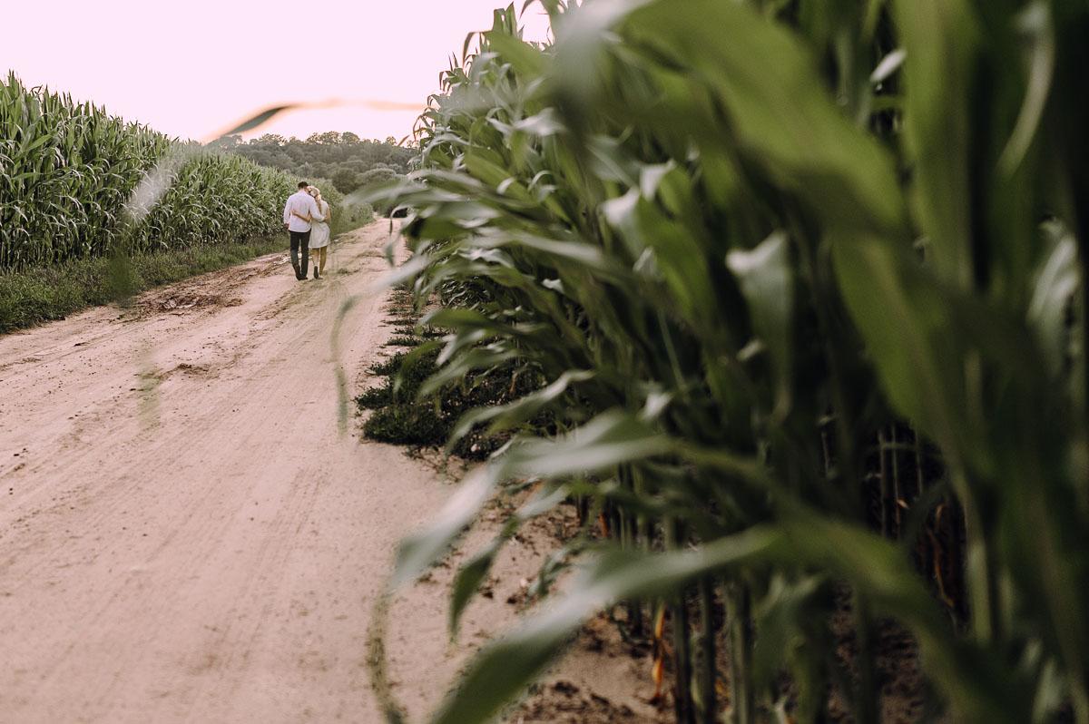 letnia-sesja-narzeczenska-pole-kukurydzy-pies-owczarek-Sandra-Ernest-008