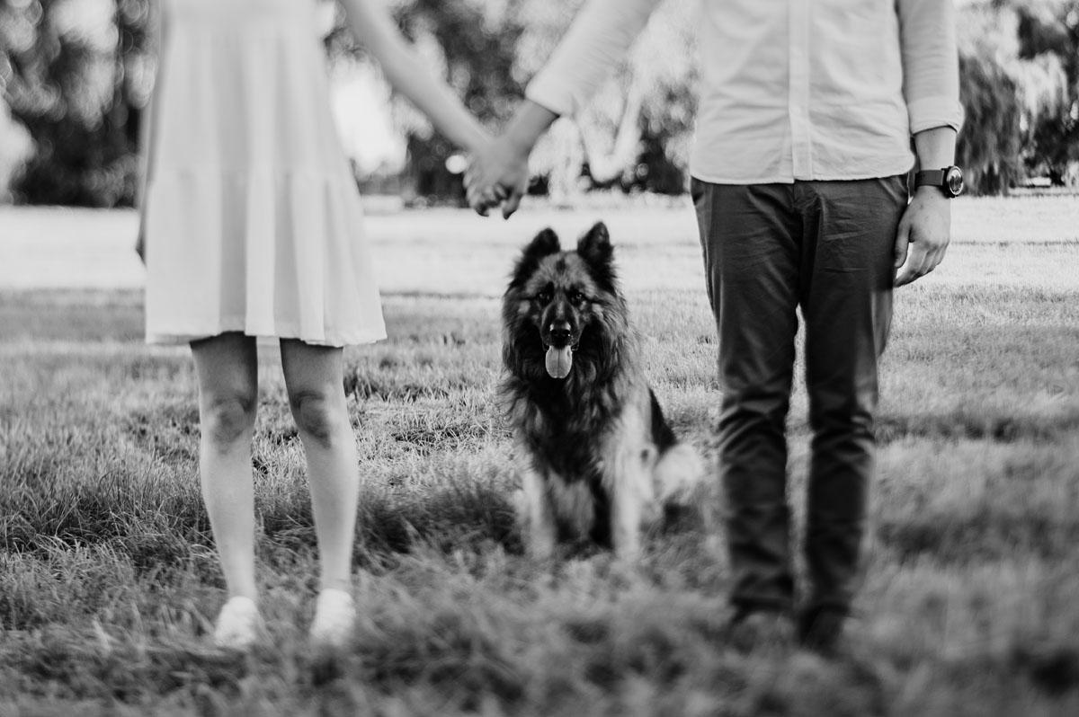 letnia-sesja-narzeczenska-pole-kukurydzy-pies-owczarek-Sandra-Ernest-018